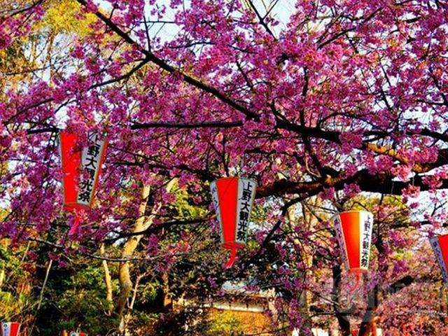 [五一]<日本大阪5日自由行>产品经理推荐,可升级京都日式旅馆
