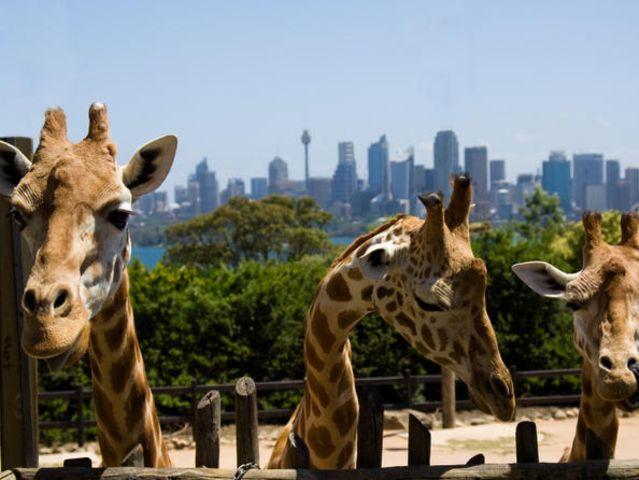 悉尼塔隆加动物园普通门票服务>