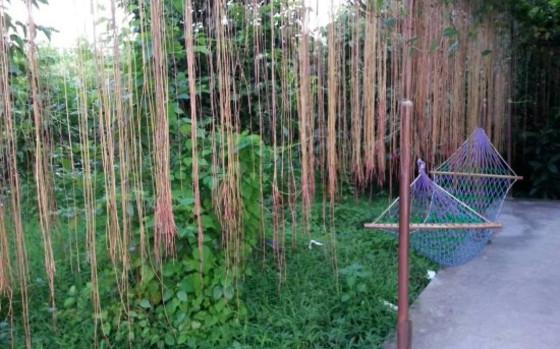 桂林毛洲岛40号果园农庄