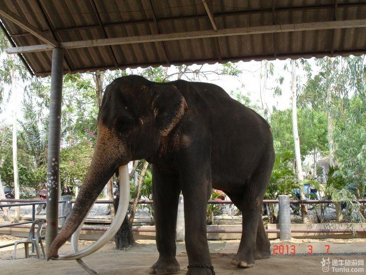 骑大象,观鳄鱼,看猴子表演,赏各种奇异小动物没有什么特殊之处和国内