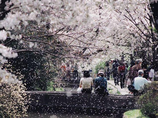 日本大阪-京都/奈良/神户包车一日游【大阪市区往返 华人司导】