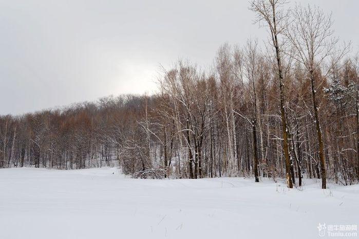 """雪""""花""""很美~ 白桦树林 小雪山,树木仿佛在和蓝天对话 因为满眼美景"""