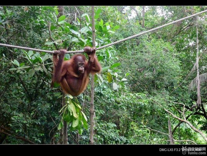去他的马来西亚热带雨林