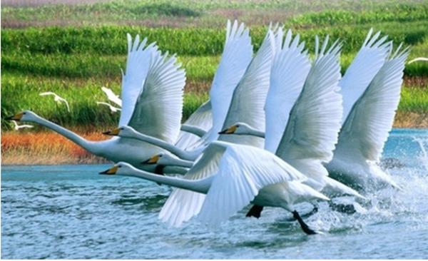 鄱阳湖帐篷观鸟节_鄱阳湖帐篷观鸟节什么时候