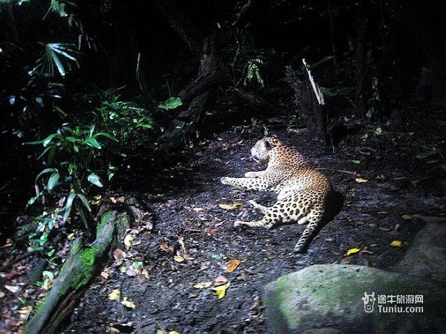 【当地玩乐】<新加坡夜间动物园门票>多时段可选,搭乘英文小火车