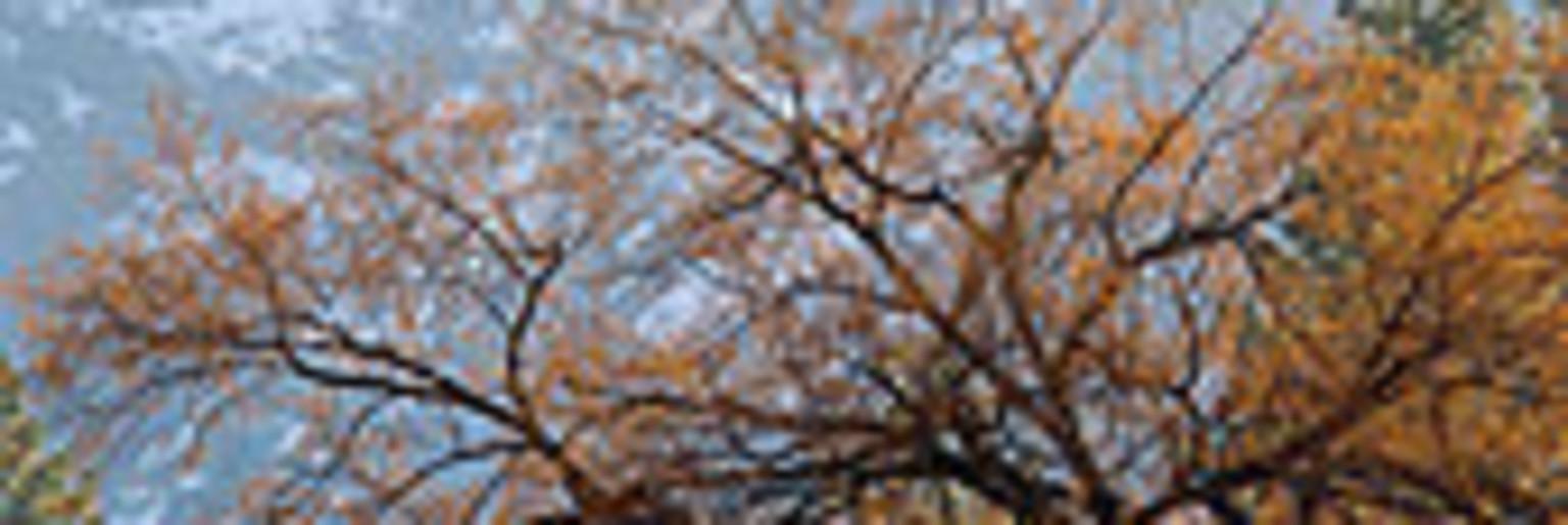 雪枫公园旅游攻略