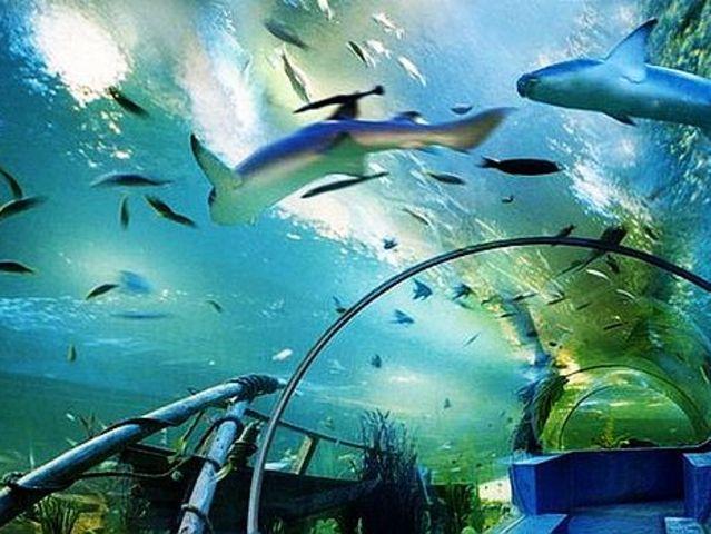 青岛极地海洋世界1日游>含极地馆,欢乐剧场,5d动感体验馆,深海奇幻