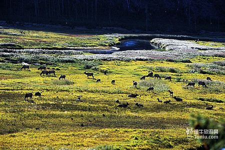 <西雅图出发黄石3晚4日盛景游>美国黄石公园、多蓝湖、五万银元店、斯波坎、密苏拉浪漫之旅(当地参团)