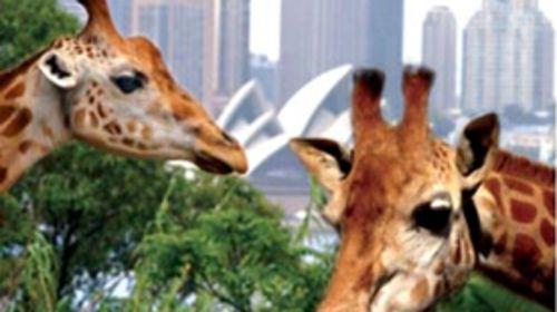 沈阳森林野生动物园(沈阳森林动物园)是由国家林业局,建设部批准的