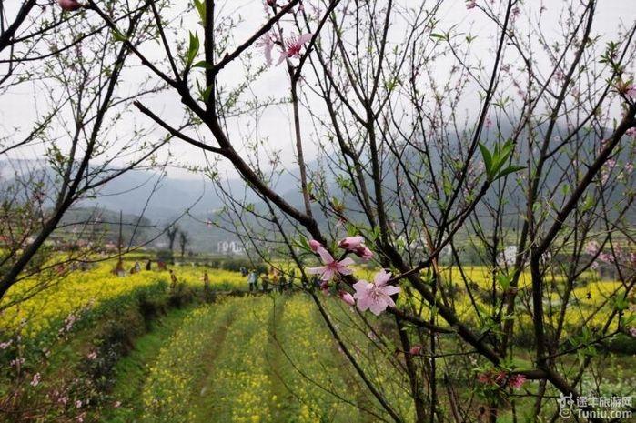 阳春三月--婺源双卧四日游图片