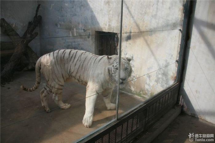 """【常州野生动物园攻略】春天里与野生动物们的""""亲密接触"""
