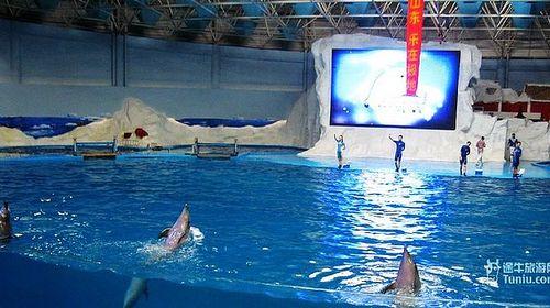 游览【青岛极地海洋世界】极地海洋动物馆为核心部分,也是目前国拥有