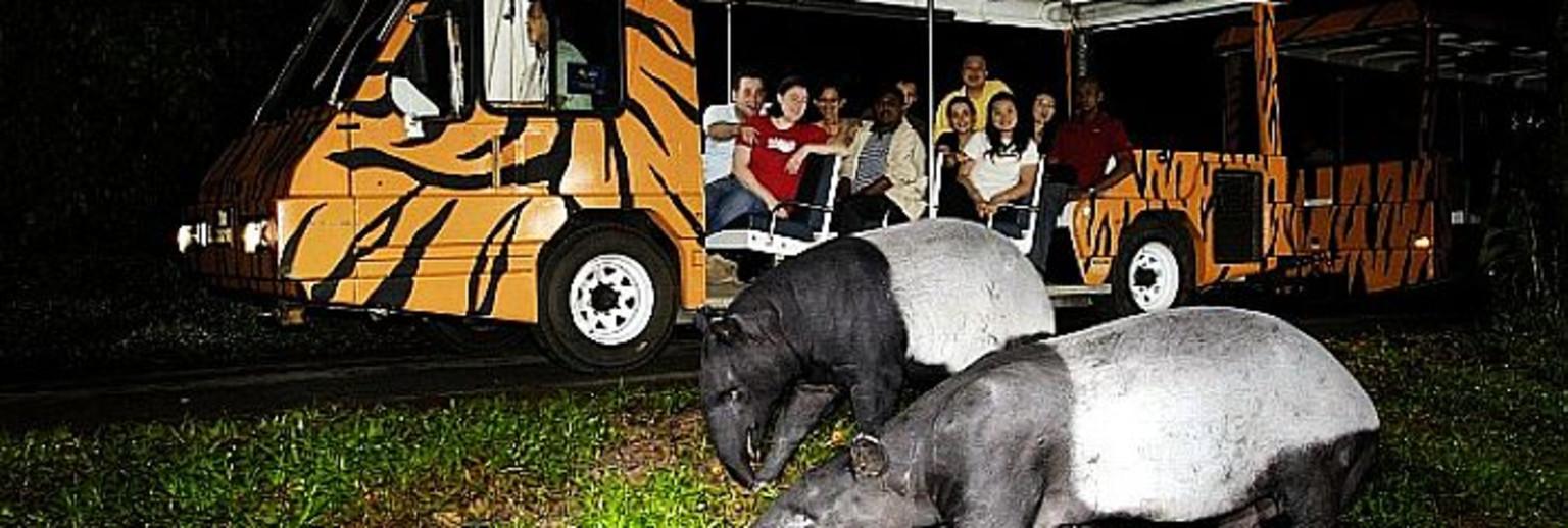 新加坡夜间动物园旅游攻略