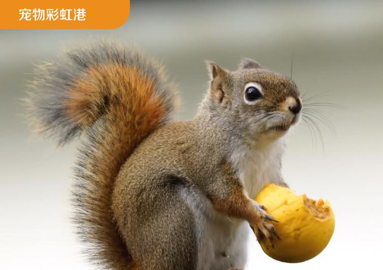亲子乐园  童年回响 四,宠物彩虹港     1)超300只可爱松鼠经科研