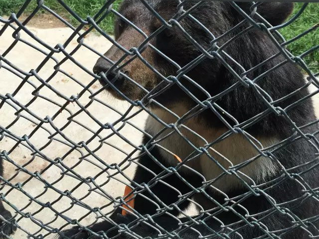 带着宝儿北京大兴野生动物园一日游
