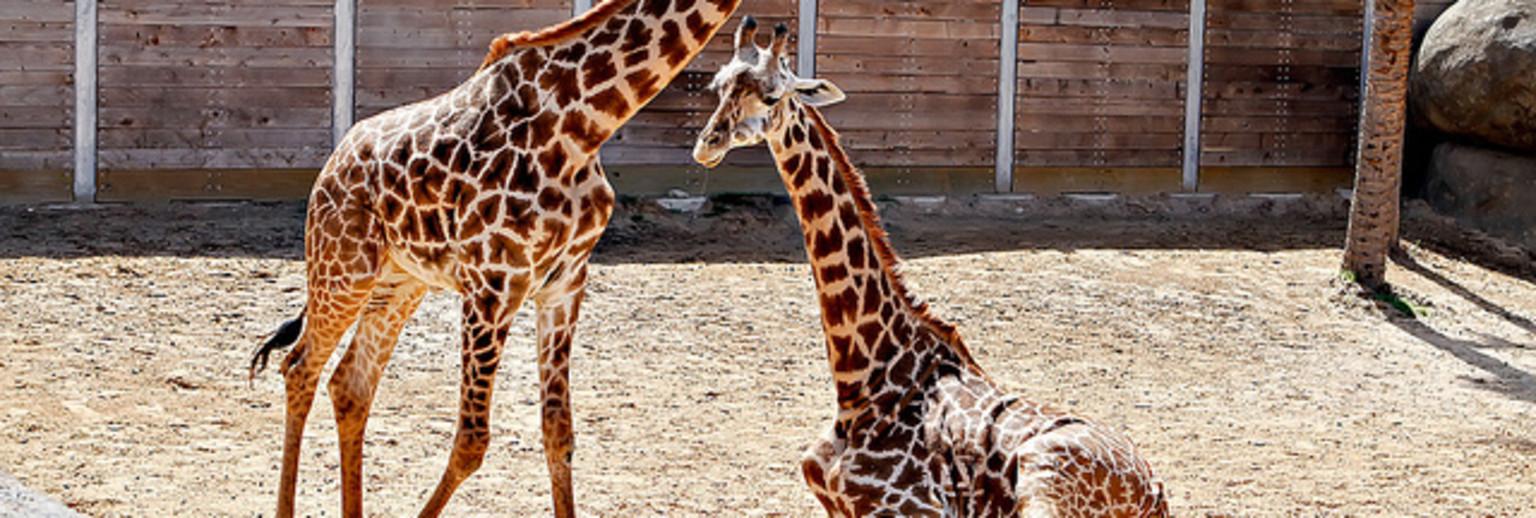 休斯顿动物园旅游攻略