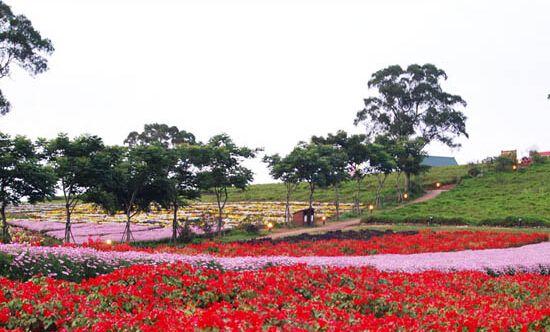 台湾大溪花海农场地址图片