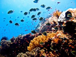 探寻海底世界