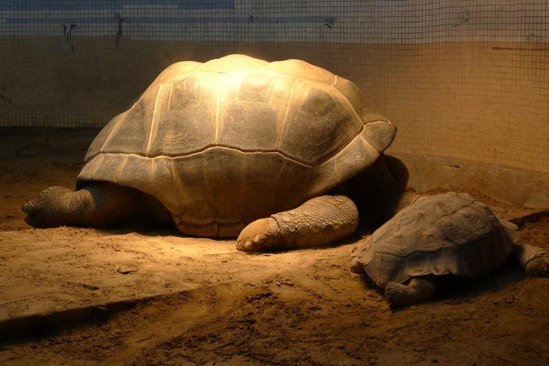 北京动物园之两栖动物爬行馆