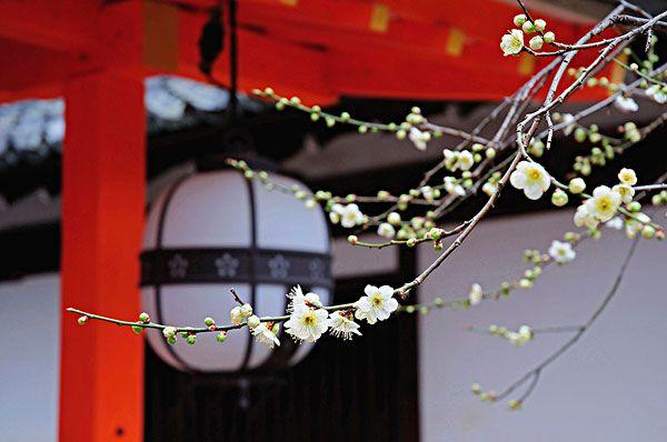 夏天去日本旅游最佳旅游时间_夏天去日本旅游