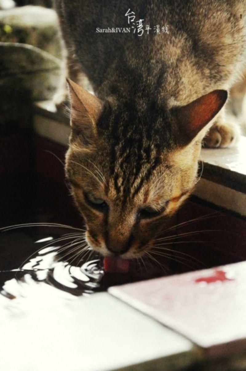 猫鼻子怎么做手工制作