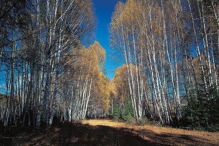 <哈尔滨-漠河-北极村4日游>神州北极村、魅力大界江、魅力漠河游