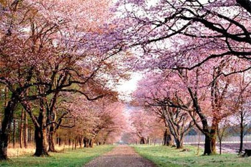日本旅游地?_日本旅游攻略_日本旅游攻略2013_日本旅游指南2013