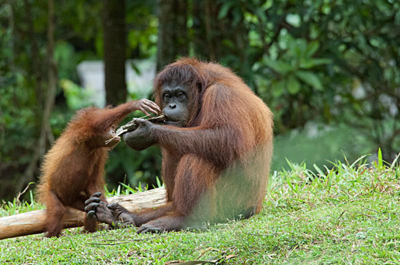 动物有什么有趣的特点