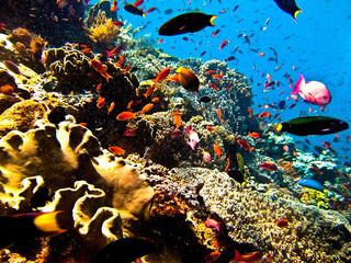 探寻五彩斑斓的海底世界