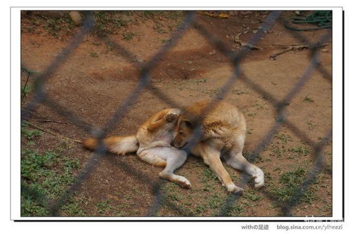 这是袋鼠耶!不是澳洲特有的动物吗?