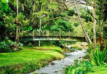 北美洲旅游 美国旅游 夏威夷旅游 夏威夷热带植物园旅游   夏威夷热带
