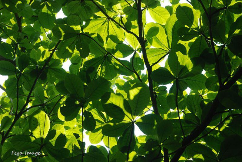 对比下,被光透过的树叶和没被光照射到的树叶反差很大,不在一个层次图片