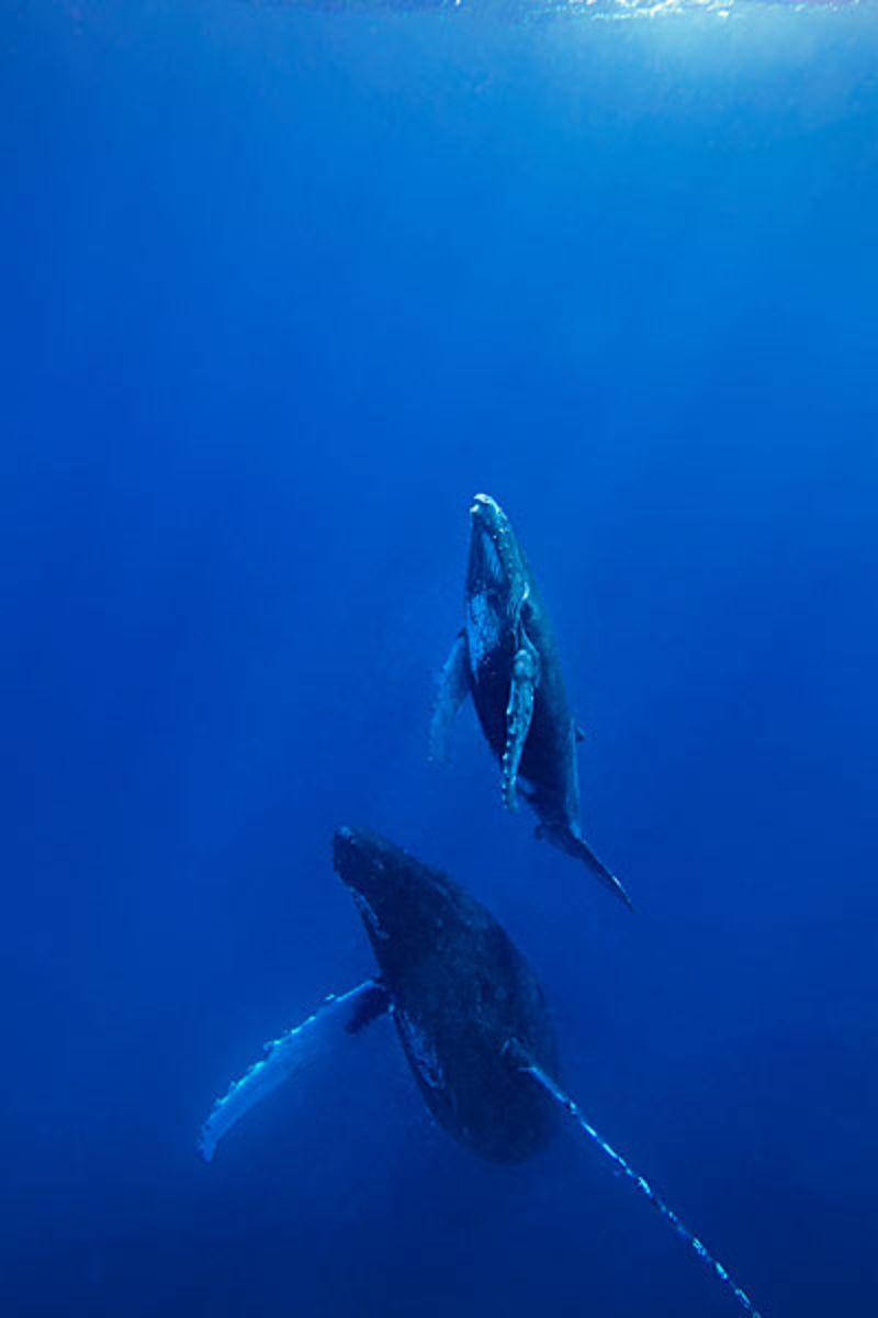 壁纸 动物 海洋动物 桌面 800_1200 竖版 竖屏 手机