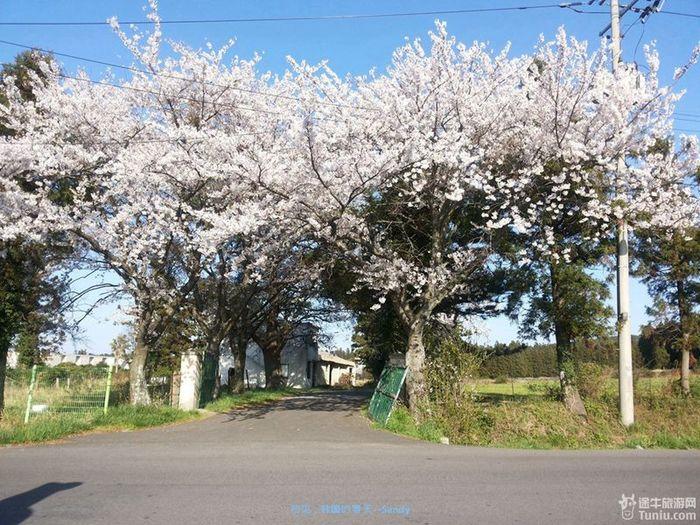 济州岛的天空可真是蓝呢!