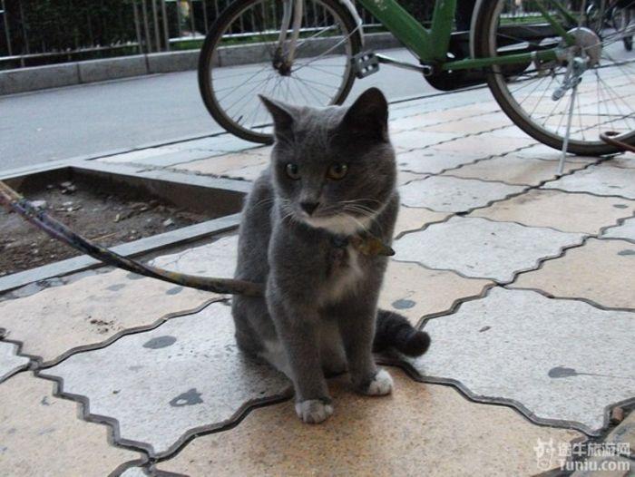 手工纸杯动物猫咪