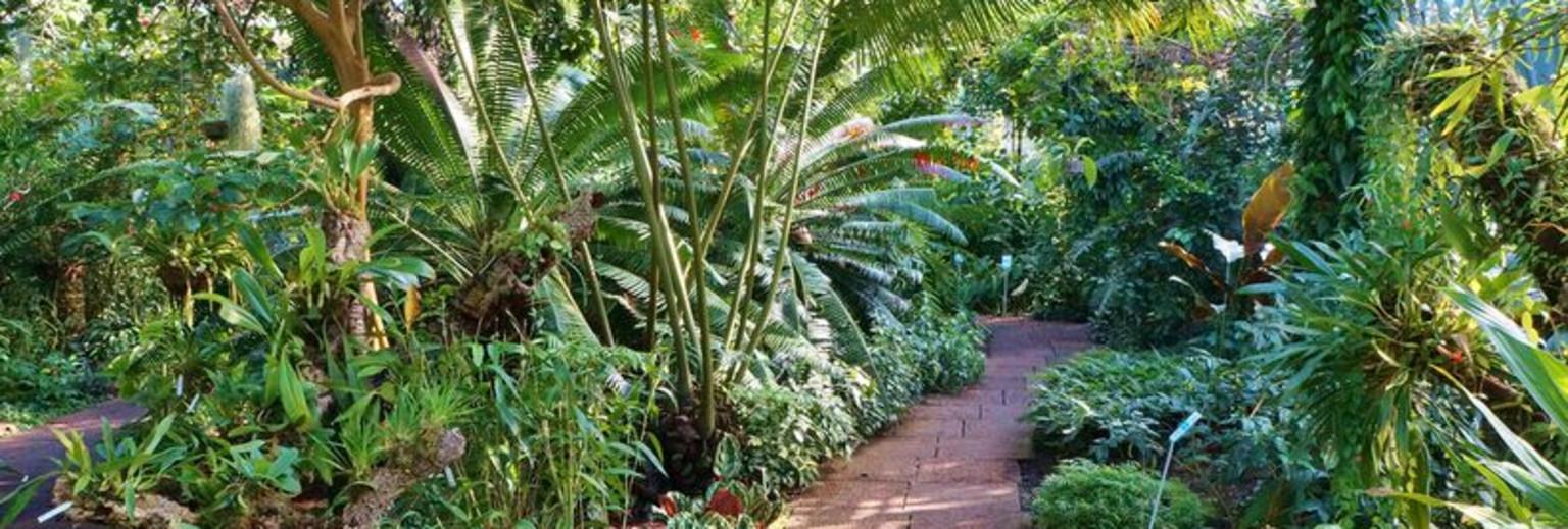 悉尼皇家植物园