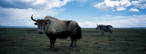 壁纸 犀牛 野生动物 600_222