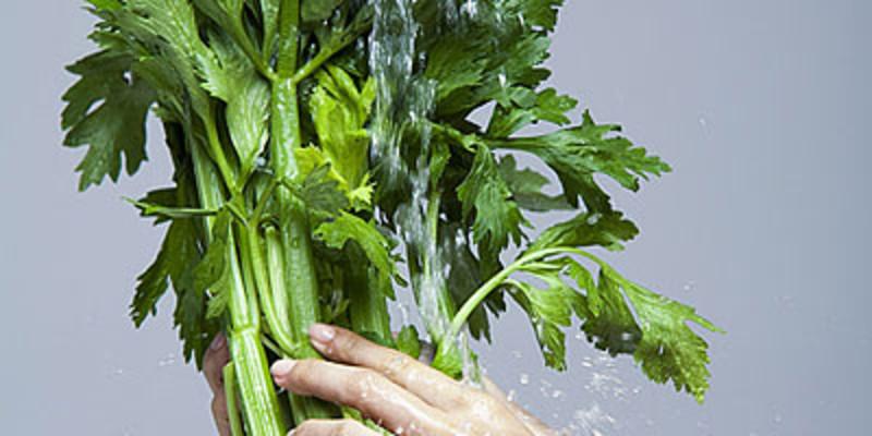 芹菜叶柄横切结构简图