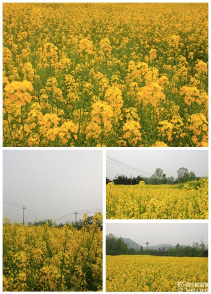 春天景色意境图片