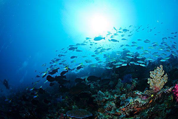 渭南岛旅游_兰州岛旅游攻略_斐济岛旅游攻略斐济到斐济旅游自驾游费用图片