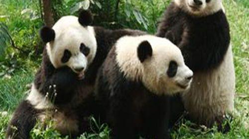 野生动物,是集动物观赏,救助繁育,休闲度假,科普教育,公益环保为一体