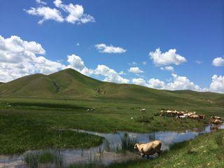 锡林郭勒大草原 乌拉盖草原3晚4日游 内蒙古旅游