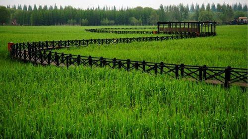 湿地植物立面素材