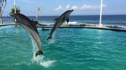 亲子巴厘岛4晚6日游>bali zoo奇幻动物园,海豚之家,红树林探险,一天