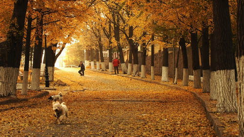 是中国著名的风景疗养区,面积70余公顷,十条幽静清凉的大路纵横其间