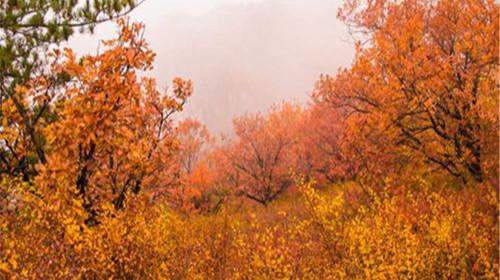 彩铅树林秋景画步骤图