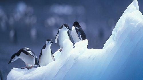 奔跑可爱萌企鹅图片