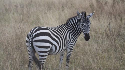 <肯尼亚-赞比亚-南非机票+当地12日游