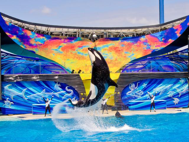 <畅玩4日游>环球影城、迪士尼乐园、海洋世界、圣地亚哥,加州多种主题缤纷任选(当地参团)