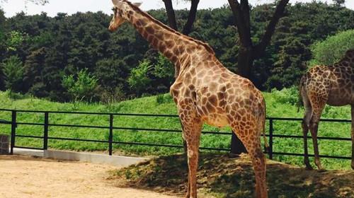 [端午] 沈阳棋盘山野生动物园自驾门票1日游>凭身份证